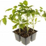 Figuring planting dates