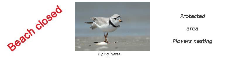 plover-heading2