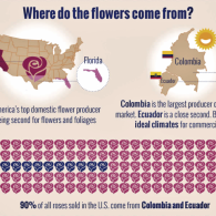 Where have all the flowers ... come from?